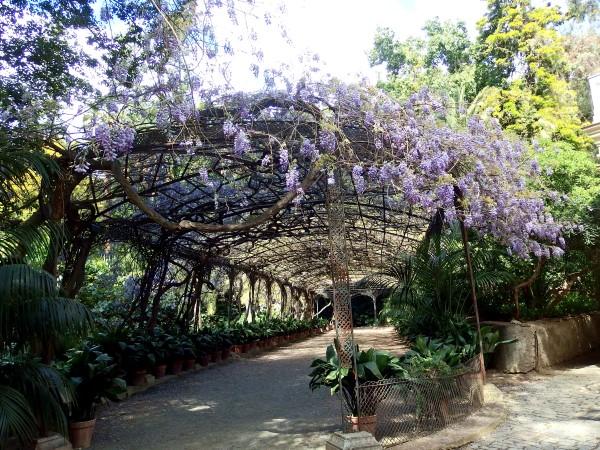 botanical garden photo spot malaga