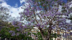 A green holiday in Malaga