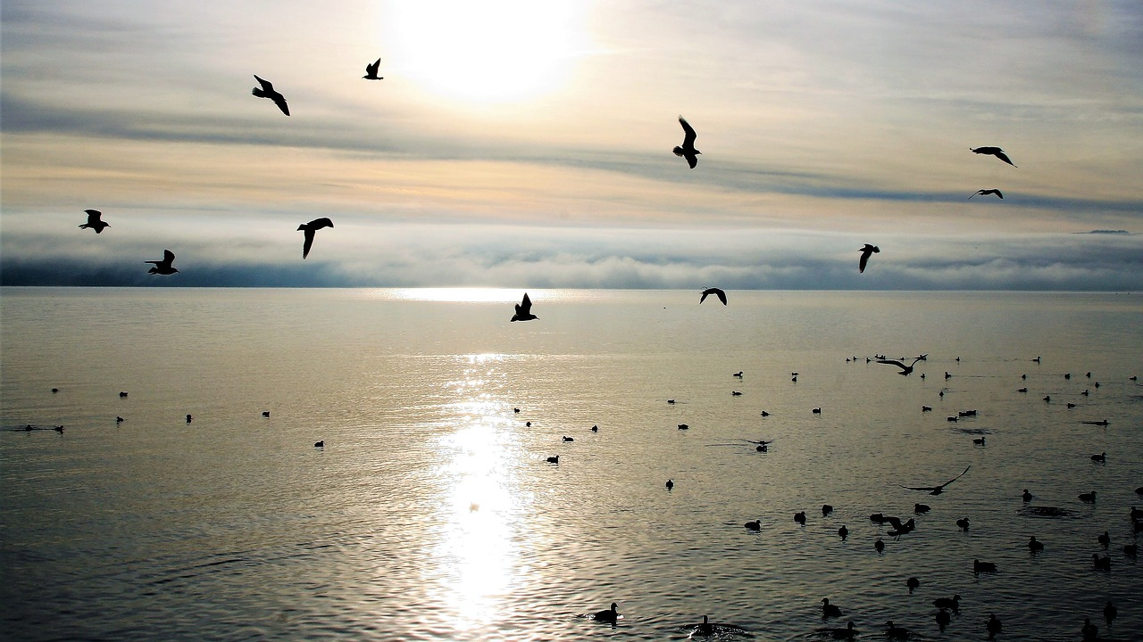 best places for birdwatching in Malaga