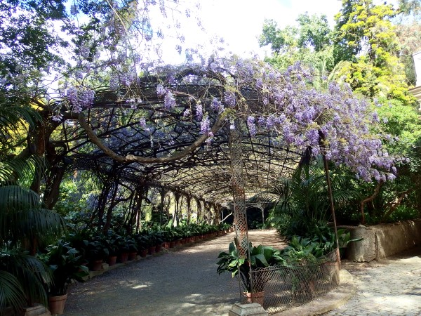 wisteria pergola at Malaga botanical gardens