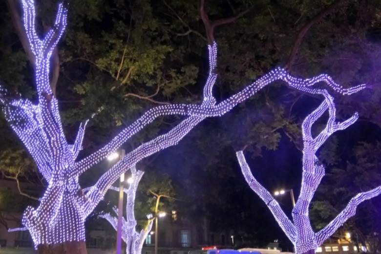 Ficus trees on the Alameda Principal in Malaga with Christmas lights