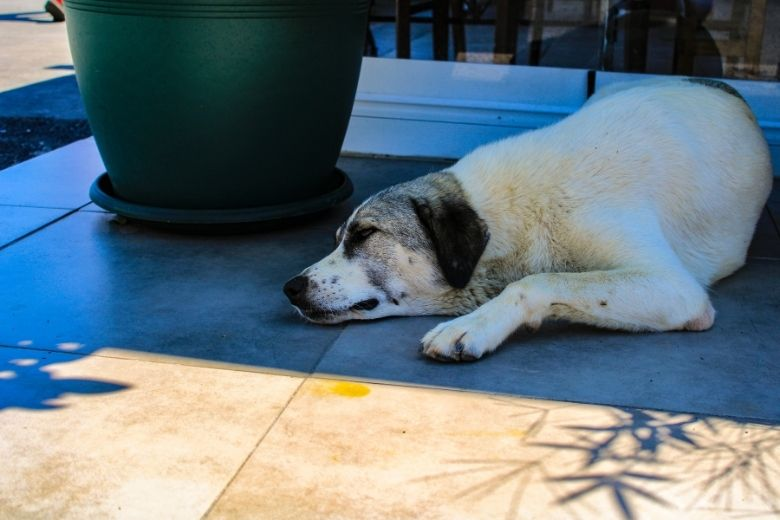 a siesta for hot weather in Malaga