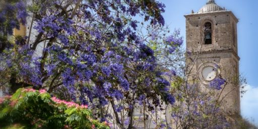 Jacaranda trees in flower during Spring in Malaga